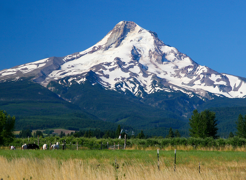 Mt. Hood from Parkdale - July 2008