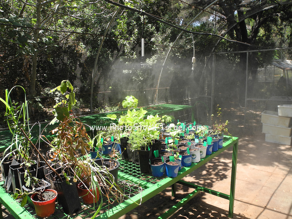 plant nursery at the Botanical garden Oranim collage, Israel
