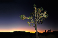 Joshua Tree NP CA