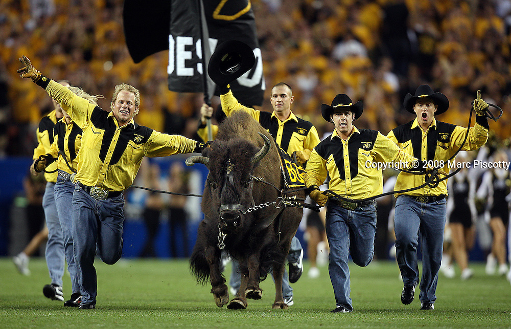 """SHOT 8/31/08 7:32:21 PM - University of Colorado mascot """"Ralphie"""" runs with her handlers to kick off the second half of their game against Colorado State in the 2008 Rocky Mountain Showdown game at Invesco Field at Mile High in Denver, Co. Colorado won the game 38-17 before a crowd of nearly 70,00. The rivalry game featured the debut of new Colorado State head football coach Steve Fairchild and the debut of highly recruited Colorado tailback Darrell Scott. Ralphie the buffalo is the name of the live mascot of the University of Colorado Buffaloes. She has been called one of the best live mascots in sports, and she is often erroneously labeled male. Ralphie is erroneously called a """"buffalo"""" (along with the team); Ralphie is actually an American Bison..(Photo by Marc Piscotty / © 2008)"""