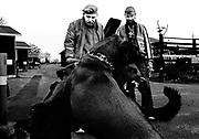 Maggie og Rebel slås. Ringo og Bob er tilskurer.<br /> <br /> Photo Carsten Snejbjerg