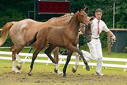 053-Aissa Marilla<br /> KWPN Paardendagen 2005<br /> Photo © Hippo Foto