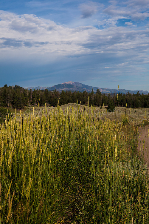 View of Electric Peak from Blacktail Plateau Drive, Yellowstone National Park, Wyoming.