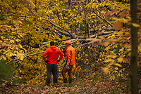 Steve Schor and Mike Ware access the damage making trails impassable at Ramblin' Vewe Farm with 20+ volunteers ready work clearing the trails Sunday morning.  (Karen Bobotas/for the Laconia Daily Sun)