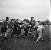 A practice line out for the Irish team as Noel Murphy, second from left, prepares to take the pass from McBride, in possession, ..Irish Rugby Football Union, Ireland v Australia, Ireland team pracrtice, Dublin, Ireland, Friday 20th January, 1967,.20.1.1967, 1.20.1967,  Referee- M Joseph, Welsh Rugby Union, ..Score- Ireland 15 - 8 Australia, ..Irish Team, ..T J Kiernan,  Wearing number 15 Irish jersey, Full Back, Cork Constitution Rugby Football Club, Cork, Ireland,..A T A Duggan, Wearing number 14 Irish jersey, Right Wing, Landsdowne Rugby Football Club, Dublin, Ireland,..F P K Bresnihan, Wearing number 13 Irish jersey, Right Centre, University College Dublin Rugby Football Club, Dublin, Ireland, ..H H Rea, Wearing number 12 Irish jersey, Left Centre, Edinburgh University Rugby Football Club, Edinburgh, Scotland, ..P J McGrath,  Wearing number 11 Irish jersey, Left Wing, University college Cork Rugby Football Club, Cork, Ireland,  ..C M H Gibson, Wearing number 10 Irish jersey, Stand Off, N.I.F.C, Rugby Football Club, Belfast, Northern Ireland, ..B F Sherry, Wearing number 9 Irish jersey, Scrum Half, Terenure Rugby Football Club, Dublin, Ireland, ..K G Goodall, Wearing number 8 Irish jersey, Forward, Newcastle University Rugby Football Club, Newcastle, England, ..M G Doyle, Wearing number 7 Irish jersey, Forward, Edinburgh Wanderers Rugby Football Club, Edinburgh, Scotland, ..N Murphy, Wearing number 6 Irish jersey, Forward, Cork Constitution Rugby Football Club, Cork, Ireland,..M Molloy, Wearing number 5 Irish jersey, Forward, University College Galway Rugby Football Club, Galway, Ireland,  ..W J McBride, Wearing number 4 Irish jersey, Forward, Ballymena Rugby Football Club, Antrim, Northern Ireland,..P O'Callaghan, Wearing number 3 Irish jersey, Forward, Dolphin Rugby Football Club, Cork, Ireland, ..K W Kennedy, Wearing number 2 Irish jersey, Forward, C I Y M S Rugby Football Club, Belfast, Northern Ireland, ..T A Moroney, Wearing number 1 Irish jersey, Forward, U