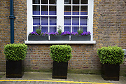 Three small potted bushes outside a house on Ladbroke Walk. In a selected few boroughs of West London, wealth has changed over the last couple of decades. Traditionally wealthy parts of town, have developed into new affluent playgrounds of the super rich. With influxes of foreign money in particular from the Middle-East. The UK capital is home to more multimillionaires than any other city in the world according to recent figures. Boasting a staggering 4,224 'ultra-high net worth' residents - people with a net worth of more than $30million, or £19.2million.. London, England, UK.