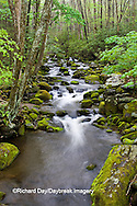 66745-04409 Roaring Fork in spring along Roaring Fork Motor Trail, Great Smoky Mountains National Park, TN