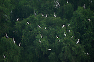 Herons and egrets (Grey heron, Great white egret, Chinese egret, Cattle egret, Black-capped night heron), in the Nansha wetland reserve, Guangdong province, China