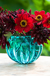 Vase of dark coloured dahlias - Dahlia 'Rip City', 'Chat Noir' and 'Bishop of Auckland'