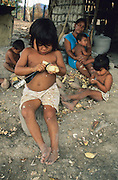 MACUXI INDIGENOUS PEOPLE, Amazon, near Boavista, northern Brazil, South America. Preparing yam roots. Children, Macuxi indians involved in long hard process extracting flour from yam root. Traditional carbohydrate staple food for tortillas and other foods. Ecological biosphere and fragile ecosystem where flora and fauna, and native lifestyles are threatened by progress and development. The rainforest is home to many plants and animals who are endangered or facing extinction. This region is home to indigenous primitive and tribal peoples including the Yanomami and Macuxi.