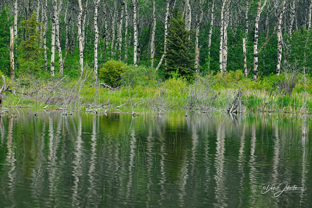 Reflections in a beaverpond