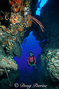 diver swims through opening in reef<br /> adorned with whip corals, Ellisella sp., <br /> Cozumel, Mexico, ( Caribbean Sea )  <br /> MR 140 -MR 142