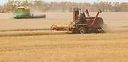 Photo Randy Vanderveen<br /> LaGlace, Alberta<br /> 2015-09-26 <br /> Gary Dixon  uses an old Massey Harris combine as modern equipment works in the background as they harvest  Canada Prairie Spring (CPS) wheat takes place on Gary and wife Shirley's land for the Bear Lake  Growing Project. The grain will be sold and money donated to the Canadian Food Grains Bank. This year the project had a number of groups and individuals from around the South Peace sponsor an acre to cover the input costs so all the money from the grain sold could be donated.