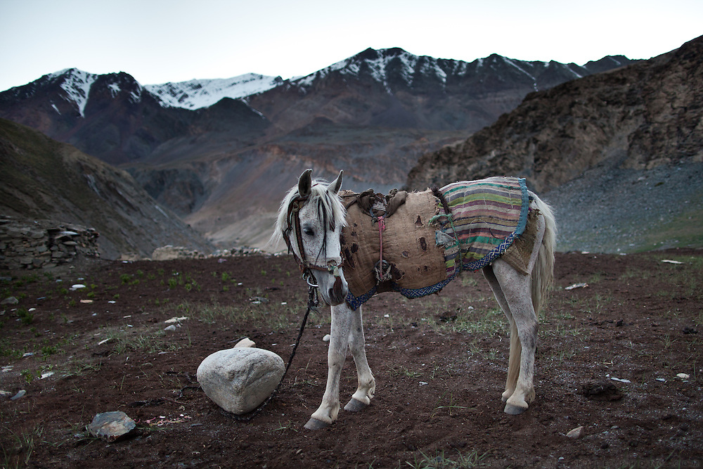A white horse. Trekking up and along the Wakhan river, the only way to reach the high altitude Little Pamir plateau, home of the Afghan Kyrgyz community.