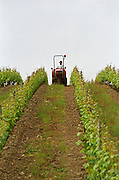 Mowing grass between rows of vines. Chateau de la Soucherie, anjou, Loire, France