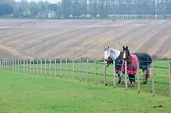 ©Licensed to London News Pictures 15/10/2019<br />