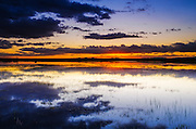 Wetlands at dawn, Bosque del Apache National Wildlife Refuge, New Mexico USA