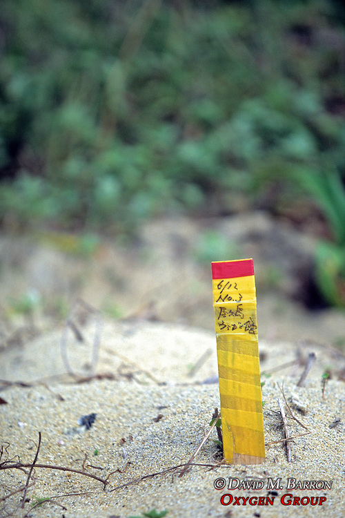 Turtle Nesting Site Markers