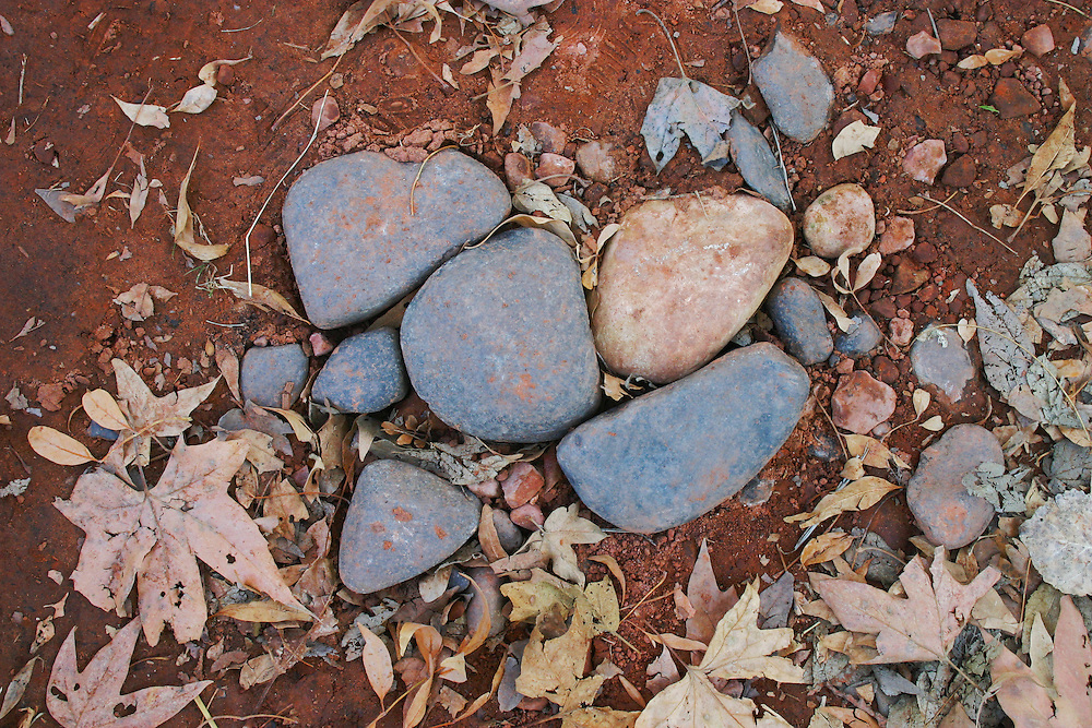 Dried leaves and stones on the desert floor, Arizona USA