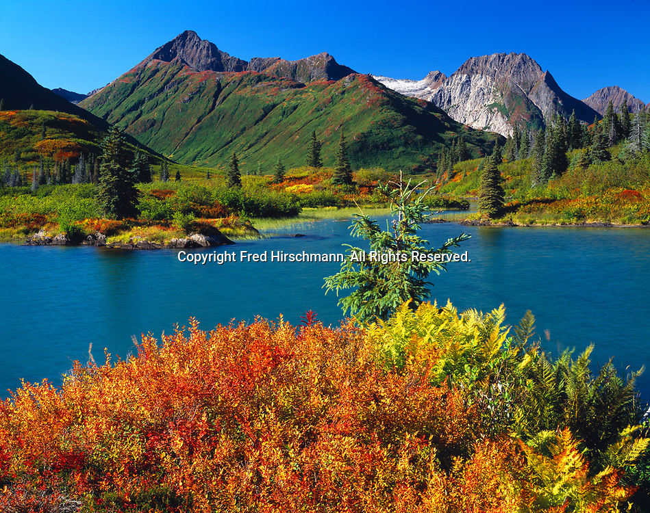 Autumn colors of tundra along the shore of Silver Horn of Lake Beverley, Wood River Mountains, Wood-Tikchik State Park, Alaska.