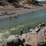 HAMDAYET, SUDAN - DECEMBER 5, 2020: A mix of refugees from the Tigray region of Ethiopia and Sudanese locals go for a swim in the Tekeze River on December 5, 2020 in Hamdayet, Sudan. Last week, the Ethiopian government declared victory in its nearly monthlong battle with the Tigray People's Liberation Front (TPLF), which sent 45,000 people fleeing to Sudan and displaced thousands more within the Tigray Region. In recent days, Ethiopian forces have prevented even more people from crossing the border into Sudan, while a TPLF spokesman said that fighting had continued outside of Mekelle, Tigray's regional capital. (Photo by Byron Smith/Getty Images)