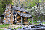 66745-04319 John Oliver Cabin in spring, Cades Cove area, Great Smoky Mountains National Park, TN