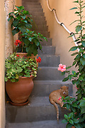 Israel, Old City of Jaffa, Cat resting on the narrow steps