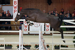 006, Pegase van't Ruytershof<br /> Hengstenkeuring BWP - Lier 2018<br /> © Hippo Foto - Dirk Caremans<br /> 19/01/2018