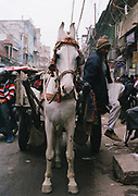 Horse in Old Delhi, India