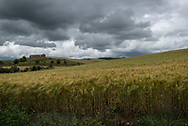Wheat fields and storm clouds on the Camino de Santiago several kilometers east of Los Arcos, Navarre, Spain