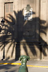 Shadow a Palm tree in the street in the Canary Islands,