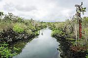Lava Landscape Photographed in the Galapagos Island, Ecuador