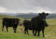 AHU2013 - Te Hape B Field Day