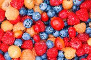 Wild berries of Alaska.