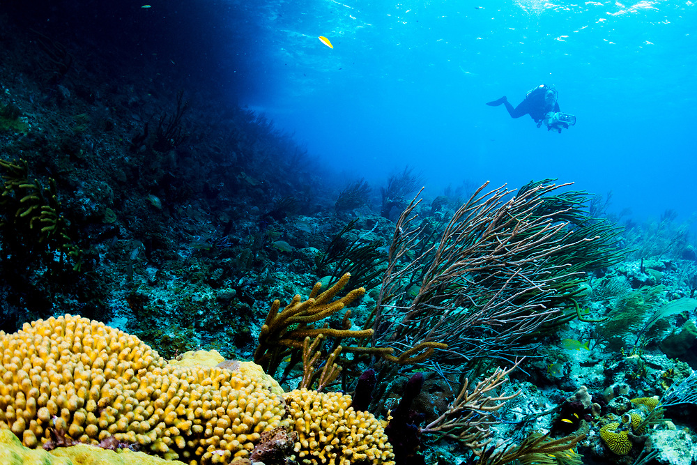 Marine biologist Dr. Brooke Gintert with the University of Miami scans a coral reef in The Bahamas with dual DSLR cameras creating a detailed photomosaic which can be compared to the past and future helping scientists understand changes to our coral reefs.