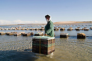 14 FEBRUARY 2003 -- PUERTO PENASCO, SONORA, MEXICO: Maria Francesca Luna Javalera, a member of an oyster growing co-operative, harvests oysters near Puerto Penasco, Sonora, Mexico. Puerto Penasco is known as Rocky Point among visitors to the Mexican beach town on the Sea of Cortez. The area is famous for wide beaches and fresh seafood, especially shellfish.     PHOTO BY JACK KURTZ