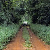 South America, Argentina, Iguazu. Jungle tracks at Iguazu National Park.