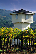 Vineyards at Silver Oak Cellars, Alexander Valley, Sonoma County, California