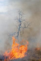 Controlled burn on Wilt's Prairie, a Blackland Prairie remnant near Ennis, Texas, south of Dallas. Texas, USA.