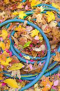 Garden hose, Cheshire County, New Hampshire, USA