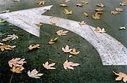 Leaf covered street marking to turn Left