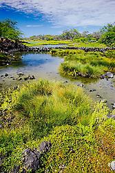 Kaloko Fish Pond (ancient Hawaiian freshwater fish pond), Kaloko-Honokohau National Historical Park, Kona Coast, Big Island, Hawaii