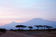 Sunrise view of Mount Kilimanjaro behind a line of Acacia Trees. Amboseli National Park, Kenya