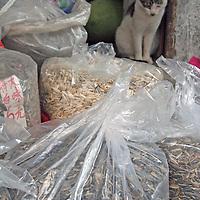 Asia, China, Chongqing. Local cat keeps watch for rats in street market in Chongqing.