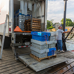 Co-op president Jim Wotton loads lobsters onto a buyer's truck at the Friendship Lobster Co-op in Friendship, Maine.