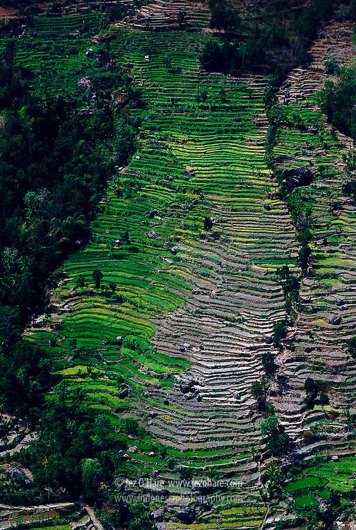 Rice Terraces between Parangtritis & Yogyakarta, Java, Indonesia.
