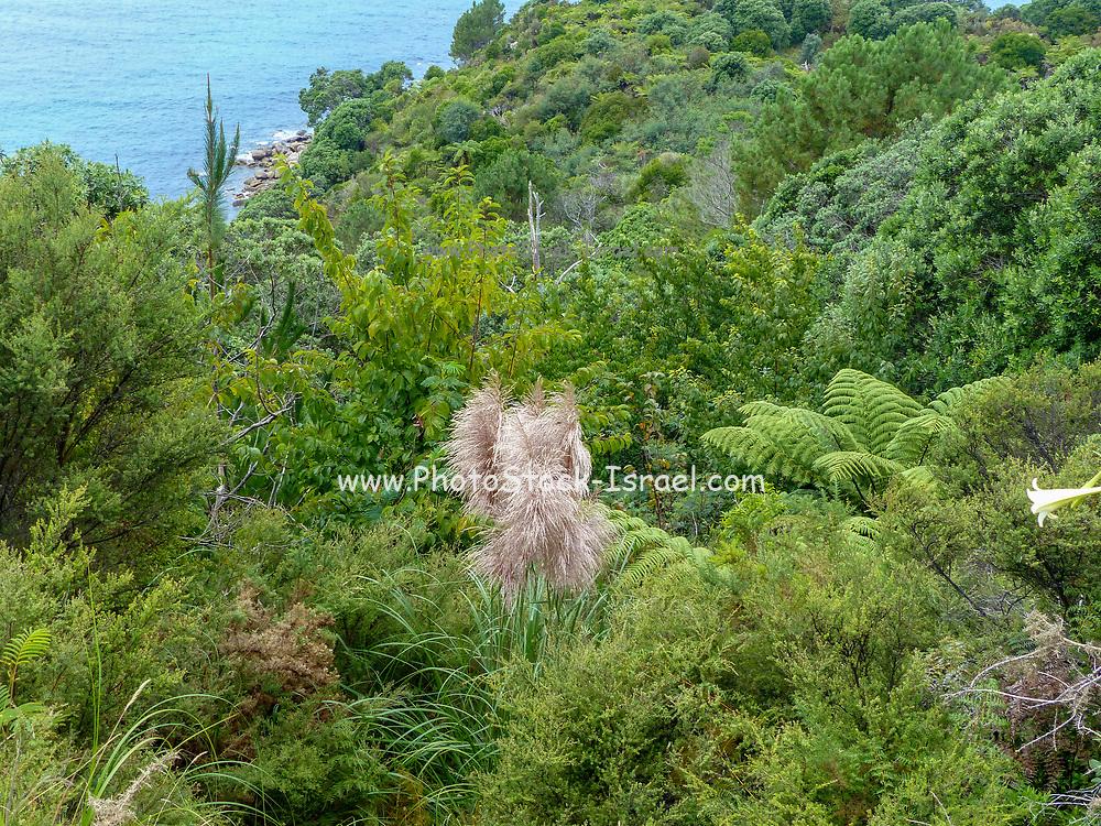 Landscape and Seascape near Whitianga New Zealand