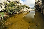 This pond is the habitat for the Majorcan midwife toad (Alytes muletensis) Torrent de s'Esmorcador, Majorca, Spain.  The Majorcan midwife toad (Alytes muletensis) is endemic to the rocky sandstone terrain of the Serra de Tramuntana in the northwest of Majorca. Not before dusk the scientists will return to the road and their car, carrying the tadpoles captured in the wild to be treated in the laboratory.   In dem Tal Torrent de s' Esmorcador hoch oben in der Berglandschaft Mallorcas finden sich kleine Felstümpel - das Laichhabitat der Mallorca-Geburtshelferkröte (Alytes muletensis). Die Kaulquappen werden eingefangen und in das Marineland Aquarium in Las Palmas gebracht. Dort werden sie einer fünftägigen Behandlung gegen die weltweit auftretende Pilzerkrankung unterzogen, bevor sie per Hubschrauber wieder in ihr Gewässer entlassen werden.