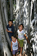 Kids in Banyan, Foster Botanical Gardens, Honolulu, Oahu, Hawaii<br />