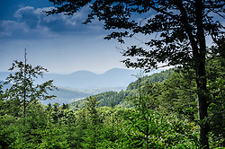 High in the Vosges Mountains near Natzwiller, Alsace, France at an altitude of 1000 metres<br /> <br /> (c) Andrew Wilson   Edinburgh Elite media